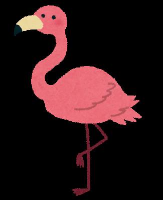 animal_flamingo