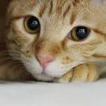 空前の猫ブーム!